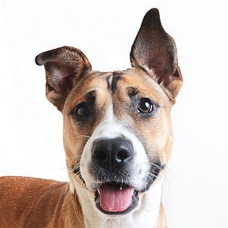 Mixed Breed (Medium)/Shepherd (Unknown Type) Mix Dog for adoption in Wilmington, Delaware - Dana