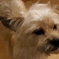 Adopt A Pet :: Bingo - Cary, NC