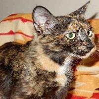 Adopt A Pet :: PATTY - Upland, CA