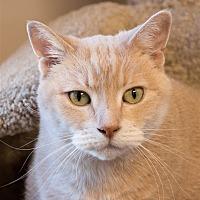 Adopt A Pet :: Porsche - San Luis Obispo, CA