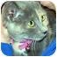 Photo 3 - Calico Kitten for adoption in Overland Park, Kansas - Franny