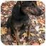 Photo 3 - Shepherd (Unknown Type) Mix Puppy for adoption in Phoenix, Oregon - Trixie