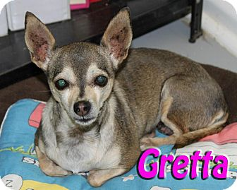 Chihuahua Mix Dog for adoption in Midland, Texas - Gretta