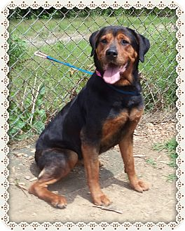 Rottweiler/Hound (Unknown Type) Mix Dog for adoption in Marietta, Georgia - SWEET PEA