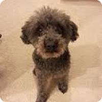 Adopt A Pet :: Marlene - justin, TX