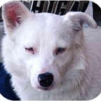 Adopt A Pet :: Angel - Mesa, AZ