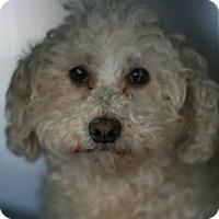 Adopt A Pet :: Miley - Canoga Park, CA