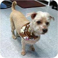 Adopt A Pet :: Manny - Ocala, FL