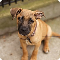Adopt A Pet :: Xander - Chicago, IL