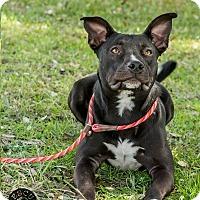 Adopt A Pet :: Buddy - El Campo, TX