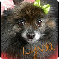 Adopt A Pet :: Lynda - Orange, CA