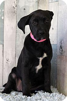 Hound (Unknown Type) Mix Puppy for adoption in Waldorf, Maryland - Tara