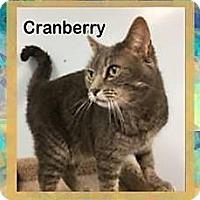 Adopt A Pet :: Cranberry - McDonough, GA