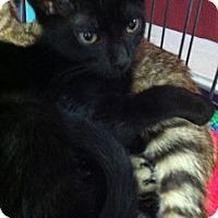 Adopt A Pet :: Calib - Seminole, FL
