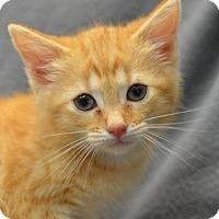 Adopt A Pet :: Colleen170780 - Atlanta, GA