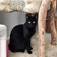 Adopt A Pet :: PICTRITE - Ocala, FL