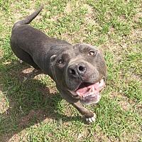 Adopt A Pet :: Max - Warner Robins, GA