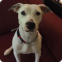 Adopt A Pet :: Whiskee - Dayton, OH