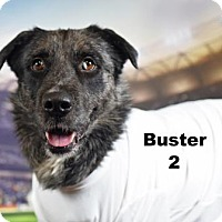 Adopt A Pet :: Buster HAVE A HEART - Lonely Heart - Gulfport, MS