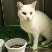Adopt A Pet :: Snow - Cody, WY