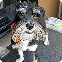 Adopt A Pet :: Cindy Lou - Buffalo, NY