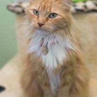 Adopt A Pet :: Charlene - Winchester, TN