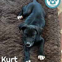 Adopt A Pet :: Kurt - Kimberton, PA