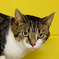 Adopt A Pet :: Nermal - Salem, WV