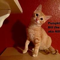 Adopt A Pet :: Silly Billy - Austin, TX