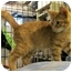 Photo 2 - Domestic Shorthair Kitten for adoption in Colmar, Pennsylvania - Dodger