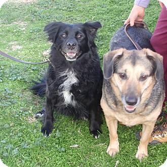 Shepherd (Unknown Type) Mix Dog for adoption in Columbus, Ohio - Emma