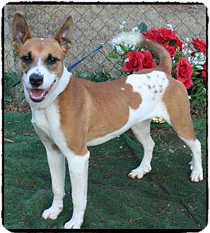 Hound (Unknown Type)/Collie Mix Dog for adoption in Marietta, Georgia - BESSIE- SEE VIDEO!