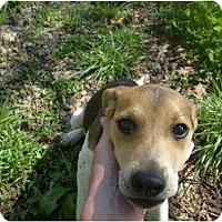 Adopt A Pet :: JoJo - Eden, NC