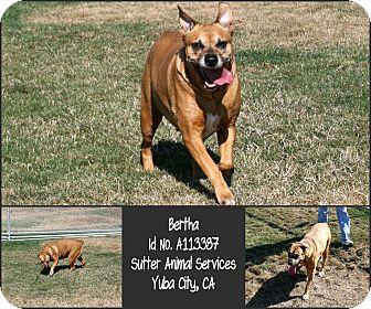 Boxer Mix Dog for adoption in Yuba City, California - *SPONSORED PUP 08/30 Bertha