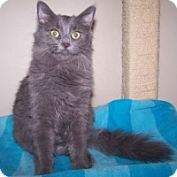Adopt A Pet :: K-Kostendt5-Anna - Colorado Springs, CO