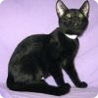 Adopt A Pet :: Amara - Powell, OH