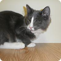Adopt A Pet :: Vaughn - Milwaukee, WI