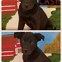 Adopt A Pet :: Cash meet me 4/21 - East Hartford, CT