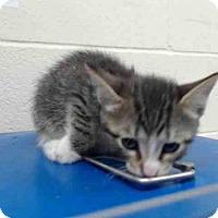 Adopt A Pet :: *CLOUDY - Orlando, FL