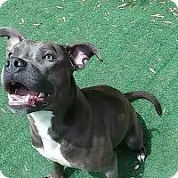 Adopt A Pet :: Bonnie - Westminster, CA