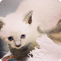 Adopt A Pet :: Sugar (avail 7/17) - Sanford, NC