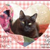 Adopt A Pet :: Mya ~ Help Needed! - Blackstock, ON