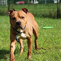Adopt A Pet :: Baby - Port Jervis, NY