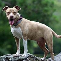 Adopt A Pet :: Ella - Burbank, OH
