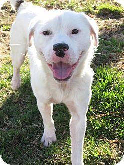 Terrier (Unknown Type, Medium) Mix Dog for adoption in Richmond, Virginia - Nugs (courtesy listing)