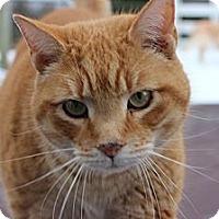 Adopt A Pet :: Otis - Maxwelton, WV