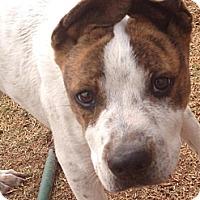 Adopt A Pet :: Prince - Alamogordo, NM