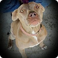 Adopt A Pet :: Lilah - Cypress, CA