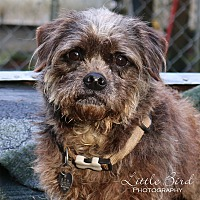 Adopt A Pet :: Angelina Hope - Seattle c/o Kingston 98346/ Washington State, WA