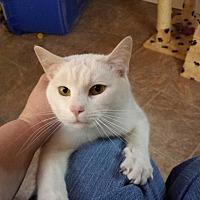Adopt A Pet :: Spot-T - Waynesville, NC